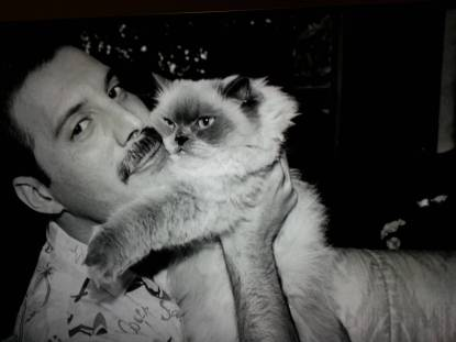 freddie-mercury-and-cat